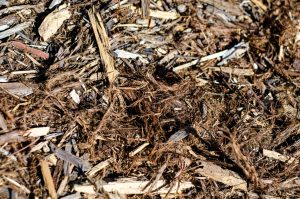 Woodchips from a planter. A texture almost like hair, but somehow more natural.